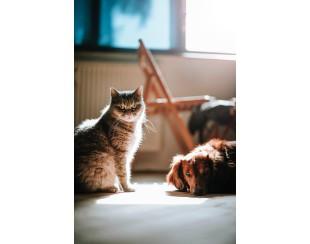 Домашние животные и уборка в квартире