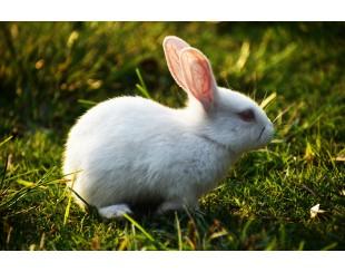 Тестирование на животных = бессмысленное издевательство
